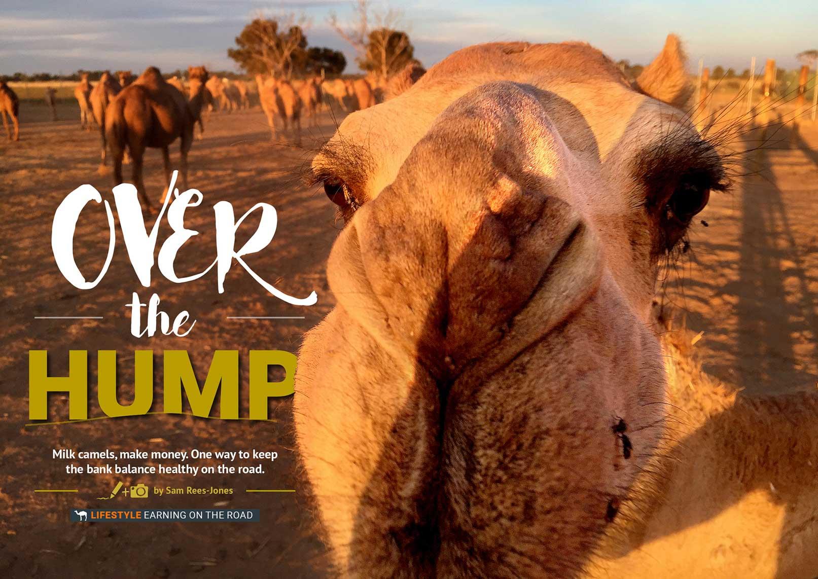 Make Money On The Road: Milk Camels
