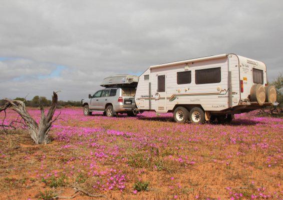 5 Ripper Bush Camps