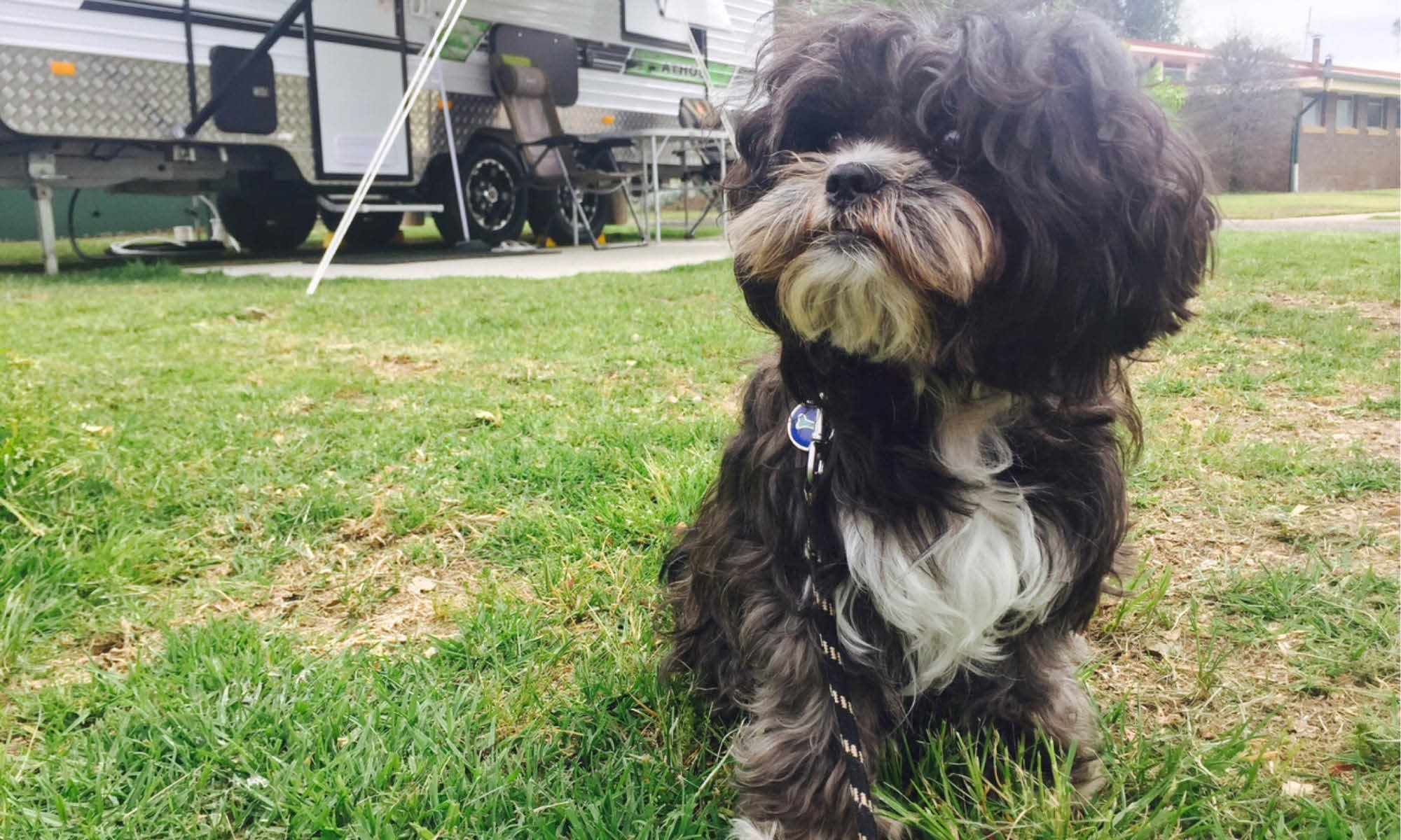 Dog Friendly Caravanning And Camping