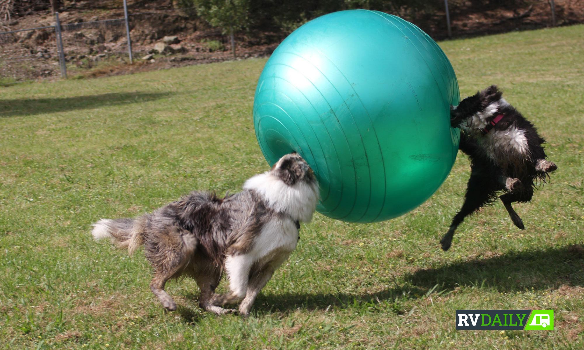 pet friendly parks