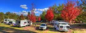 Caravan Parks for our pets: 3 we love, 3 we long for