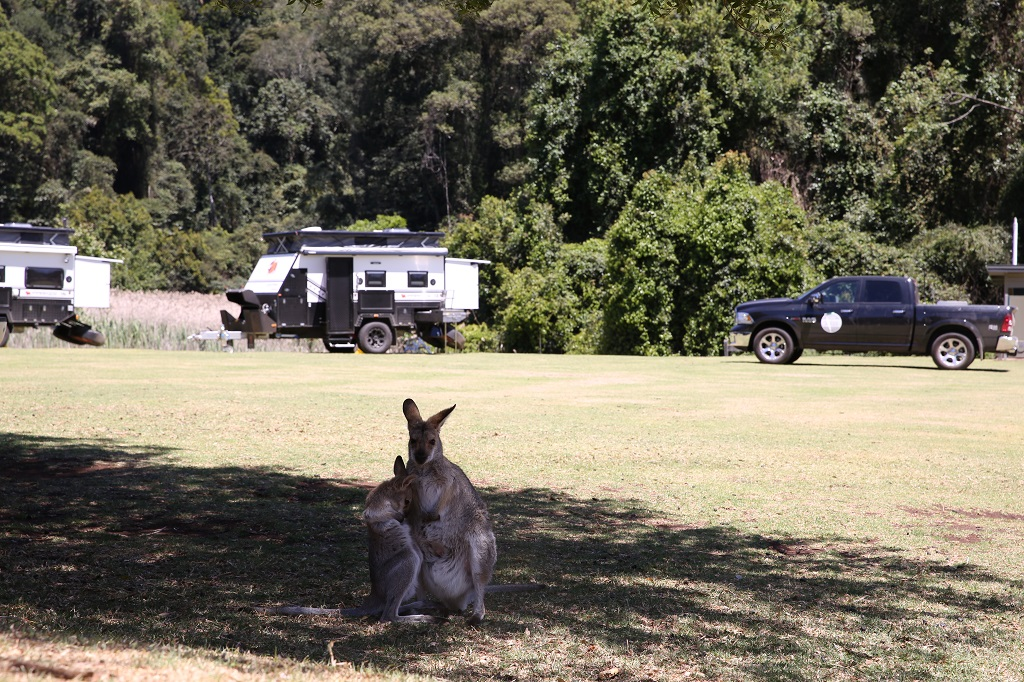 Queensland camping to be shut down